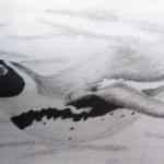 zeehond2