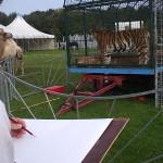 Tekenen bij Circus Belly 4