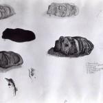 studieblad stenen 02