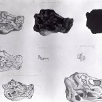 studieblad stenen 03