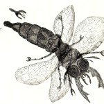 insect 02
