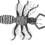 insect 03