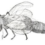 insect 07