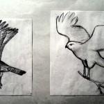 Dans vogels schetsen