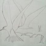 Dans vogels schetsen 2