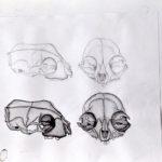 Studieblad schedels