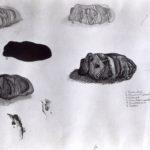 Studieblad stenen