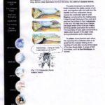 Uitleg 'continental drift' 4
