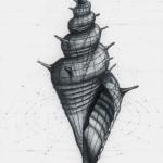 5. Gulden ratio shell (sketch 07-08-2020) A4 HB