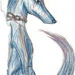 havo 2_ wolf